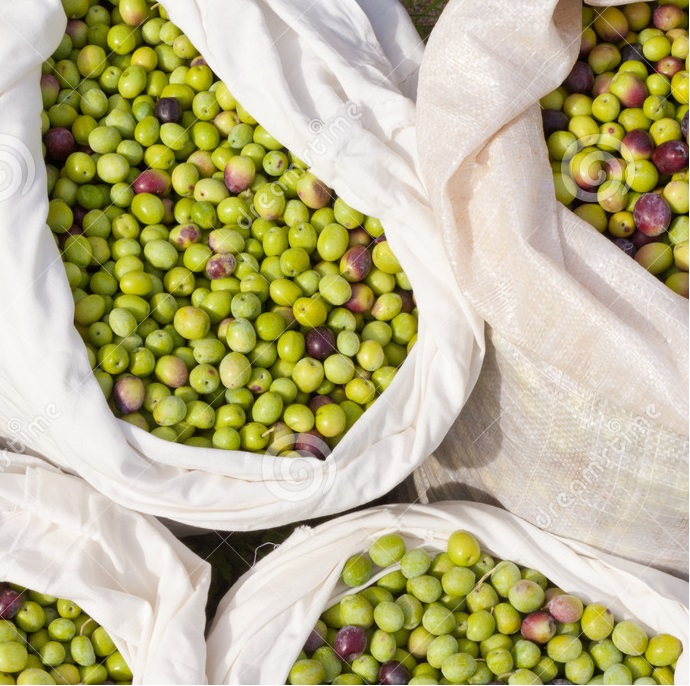 Fresh olives natural 100% BIO from Morocco