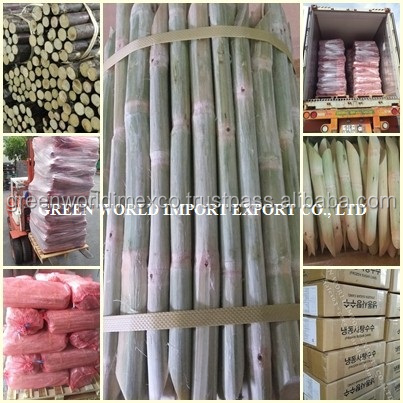 Amazing taste of frozen sugar cane, best for juice, best seller to USA, Korea