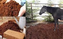 Nursery and Gardening Use Coir Pith Block / Coco Peat Brick