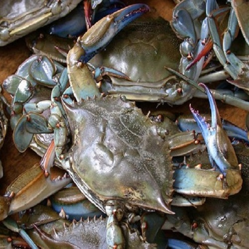Blue Swimming Crab Live Frozen Crab