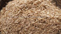 Grade A wheat bran for animal feed