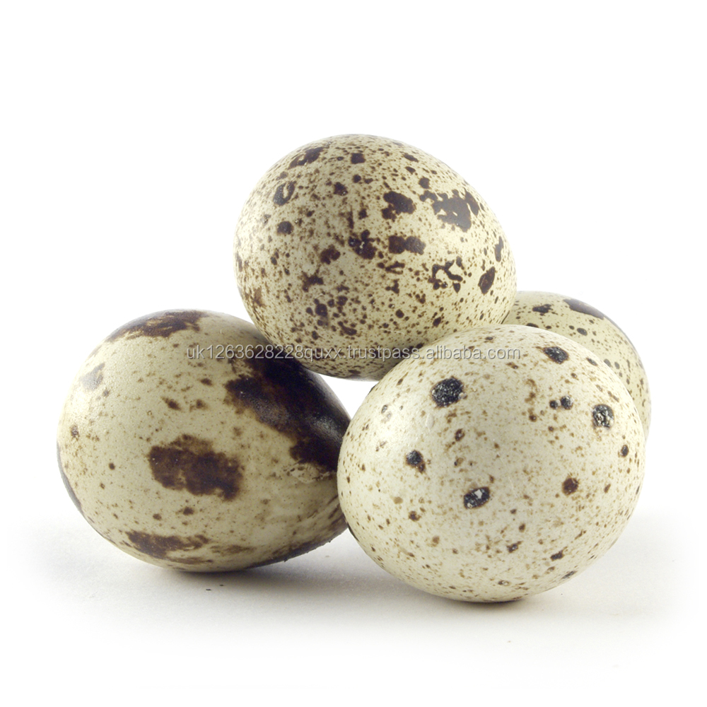 Fresh Fertile Quail Eggs