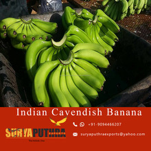 fresh banana cavendish