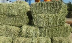 Best Sun Dried Alfalfa Hay For Animal Feed