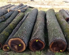 Walnut Logs for sale