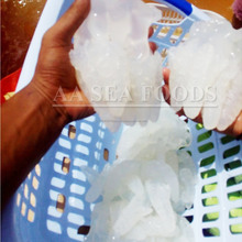 Distinguished/Suppliers Salted Jelly Fish special/quality