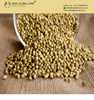 High Quality Coriander Seeds And Coriander Powder For Sale From India