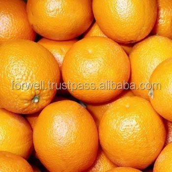 ORANGE / LEMON / GRAPEFRUIT / FESH FRUITS TOO FROM EGYPT