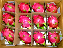 Fresh Dragon fruit/pitaya fruit