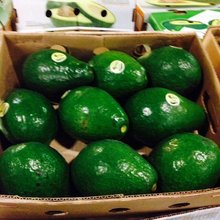 Premium Quality Fresh Fuerte/Hass Avocados for sale