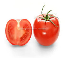 Best Quality Fresh Big Size juicy Indian Tomato