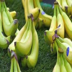Good Quality Fresh Cavendish Banana For Sale