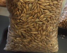 Premium Quality Animal Feed Barley