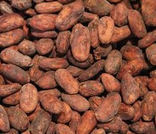 Best Dried raw Cocoa Beans / dried fermented cocoa beans