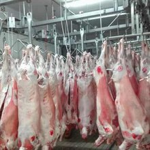 Frozen Halal Lamb Meat,Mutton,Goat,Veal,Beef,Venison and Carcass