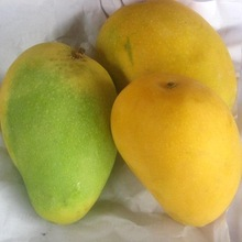 BEST QUALITY GREEN FRESH MANGOS FOR SALE