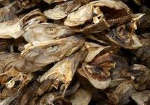 Norway Dried Stock Fish, Cod, Haithe, Haddock, Dried Stock Fish Heads