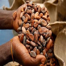High Grade Sun Dried Cocoa Beans For Sale Now from Gabon