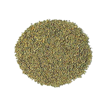 green Millet Exporter For Animal Feed And Human Consumption
