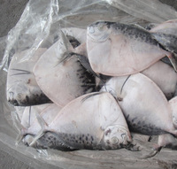 Tasty Sea frozen Caught Whole Round Moonfish By SGS Certified Supplier