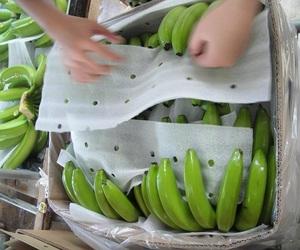 High Quality Fresh Cavendish Banana from Philippines