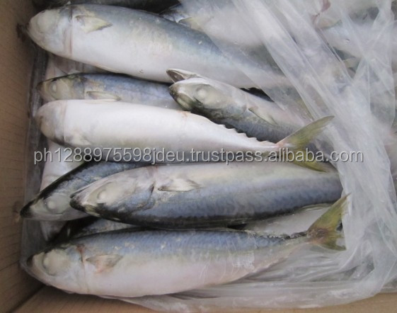 Sea Food Frozen Black Tilapia Fish From Wholesale
