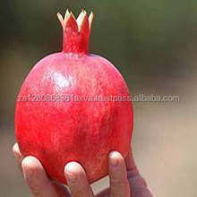 Quality Fresh Pomegranate for sale 30% off