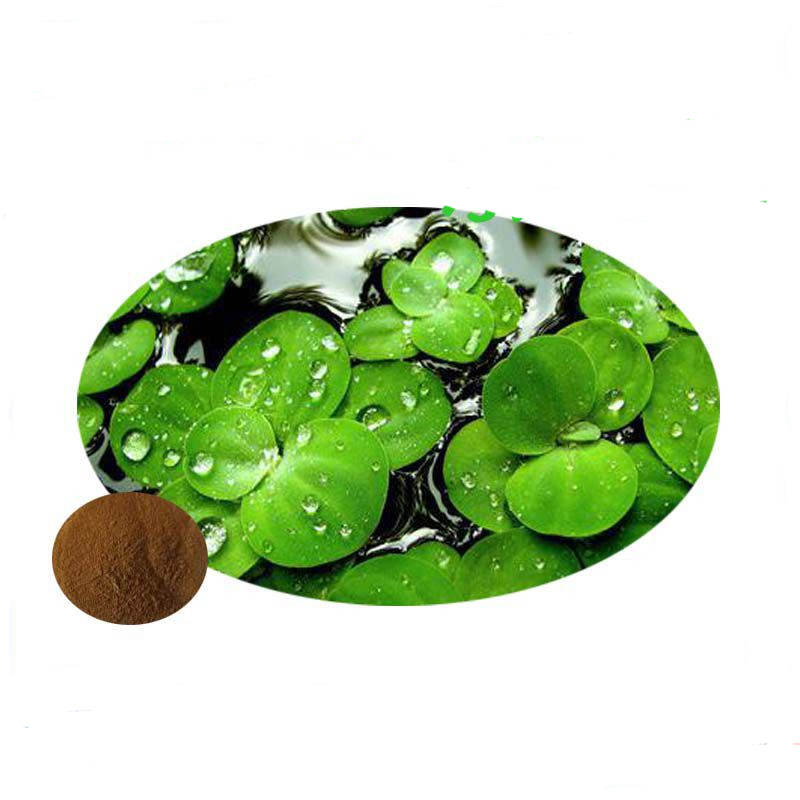Honson Ingredient: Natural 10:1 Vitexin Duckweed Extract