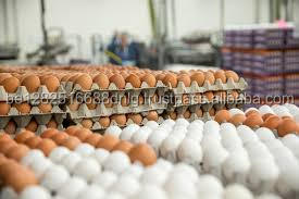 Best quality White/Brown Fresh Table Chicken Eggs