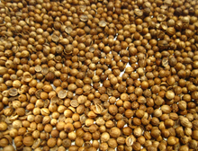 2017 Top Selling High Quality Coriander Seeds for Wholesale