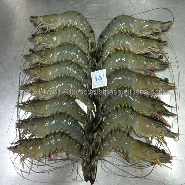fresh live freshwater shrimp