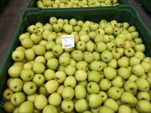 Sweet Golden Delicious Fresh Apples