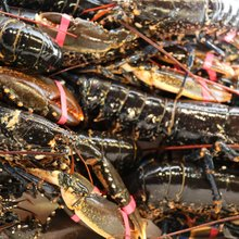 Wholesale west african seafood fresh price frozen lobster