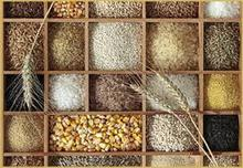 Grains, Cereals, Maize, Wheat, Barley, Sorghum, Rice FOR SALE