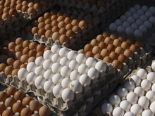 Fresh Chicken Brown & White Table Eggs FOR SALE