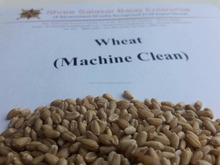Commonly Used Machine Clean Quality of Wheat.