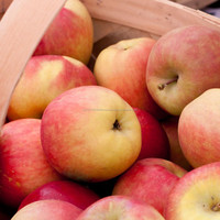 Fresh Royal Gala/Fuji/ Golden/Red Delicious Apples / Freeze Dried Apple