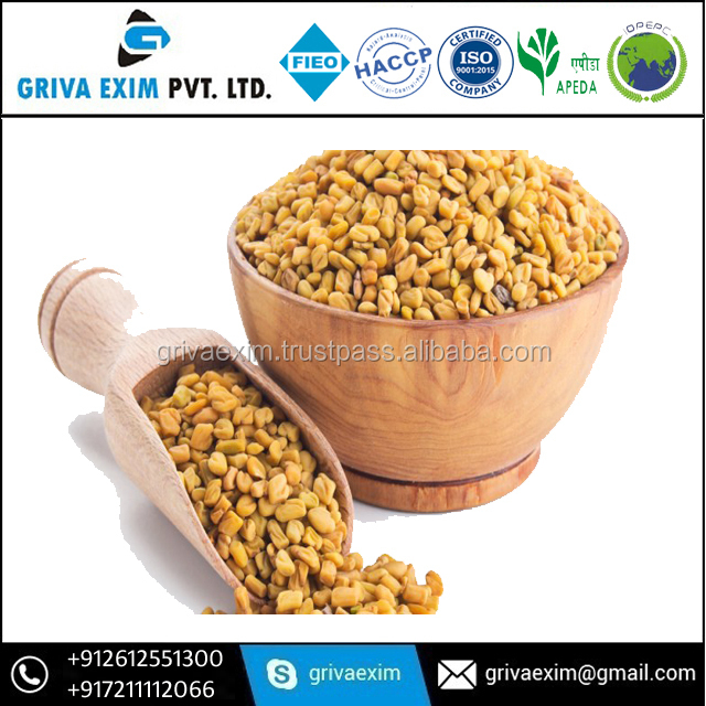 Indian Origin Fenugreek Seed Fenugreek Seed