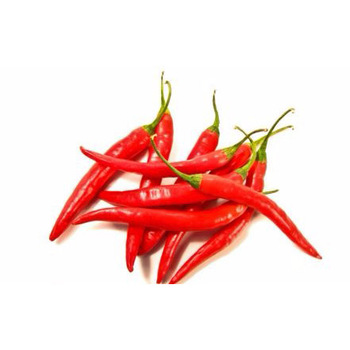 wholesale egypy fresh chili with high quality