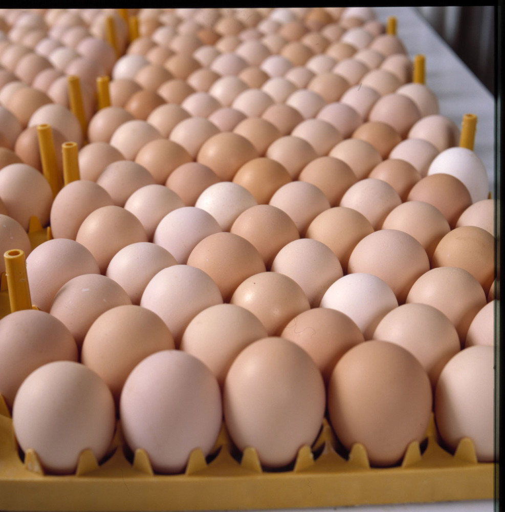 Fresh white/brown chicken egg at affordable prices