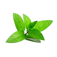 Mentha Piperita Natural Peppermint Oil Precious High Quality for Aromatherapy Uses