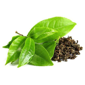 Organic Green Tea, Dried Green Tea For Healthy For Sale