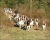 Pure Breed Boer Goats, Live Sheep, Cattle, Lambs And Cows For Sale ( Goats )