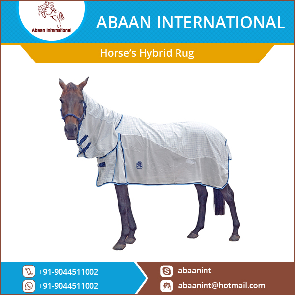 Horse's Hybrid Rugs and Combo for Summer