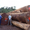Teak logs Cheap Prices. Factory prices