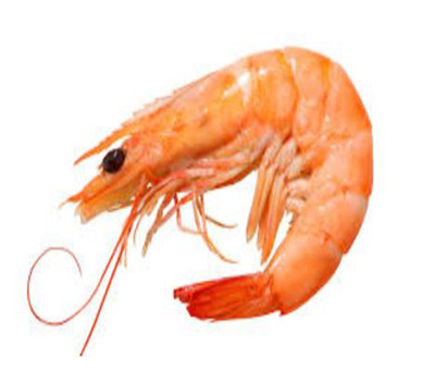Latest Promotion Seafood Product Wholesale Frozen Shrimp From U.S.
