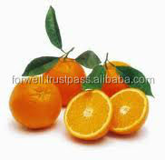 Sweet Taste Fresh Orange Fruit With Cheap Price And Delicious Flavour