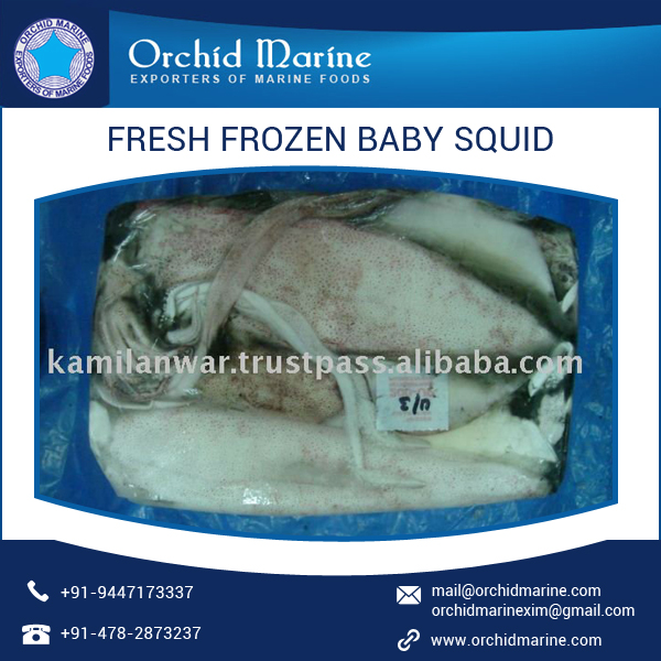 Highly Demanded Rich Protein Fresh Frozen Baby Squid Sea Food for Sale