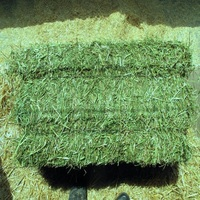 Organic Alfalfa Hay in Bales For Animal Feed wholesale