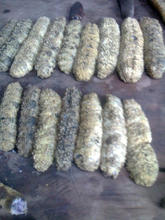 High Quality of Wild Sea Gamat / Curry fish Sea Cucumber from Indonesia